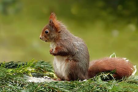 brown rodent macro shot