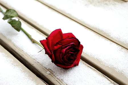 red rose on top of wooden surface
