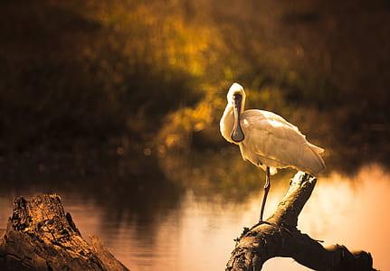 sepia photo of white crane perching on tree