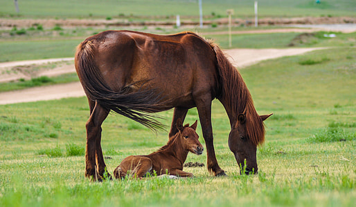 brown horse and baby horse