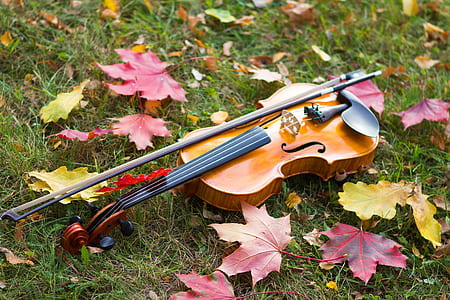 brown violin with bow on top