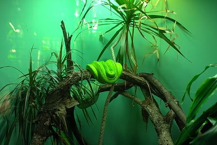 resting green tree snake