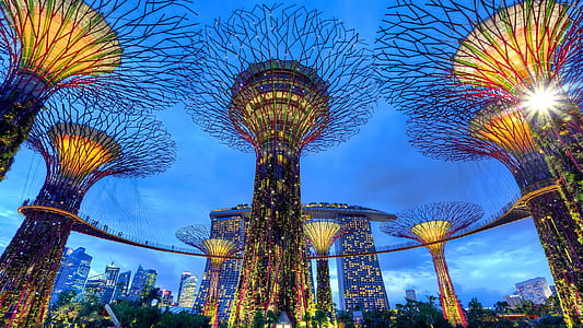 low angle view photography of Gardens By The Bay