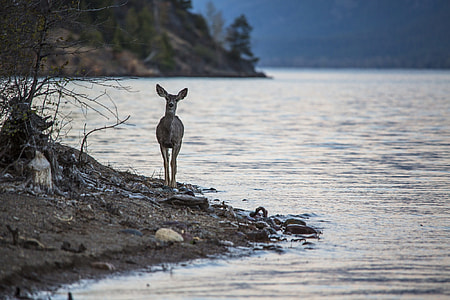 brown deer near body of water during day