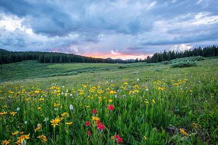 photo of assorted color flowerfield