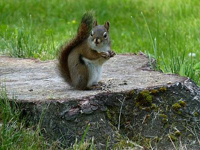 brown squirrel on brown tree stump
