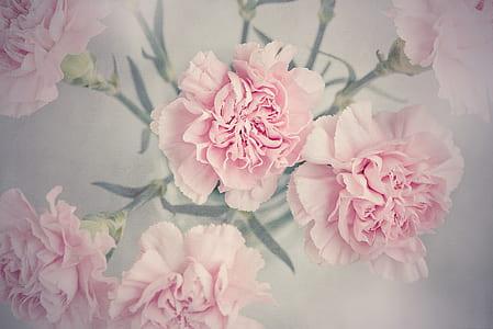 pink flowers digital wallpaper