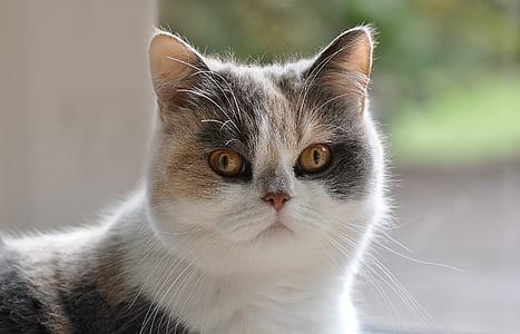 white and orange cat