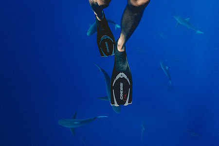 person in black Cressi flippers swimming