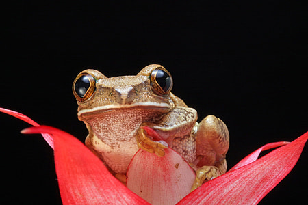 brown frog on red petaled flower in bloom
