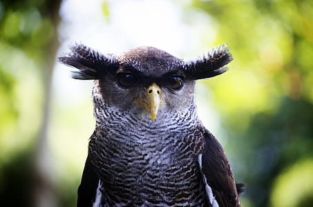 gray Owl on shallow photography