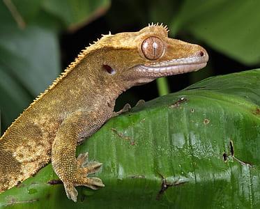 brown lizard on top of green leaf