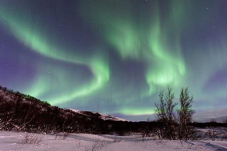 green aurora boreallis