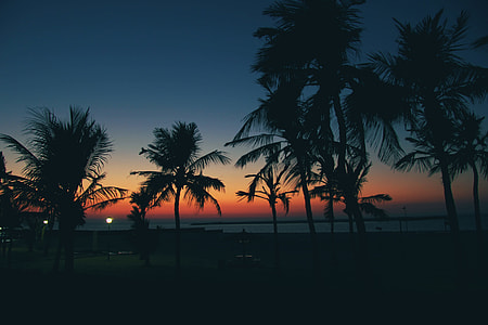 Sunset Palms with Cloudless Sky