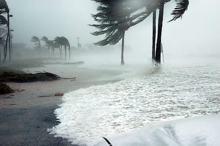 sea wave on coconut trees during daytime