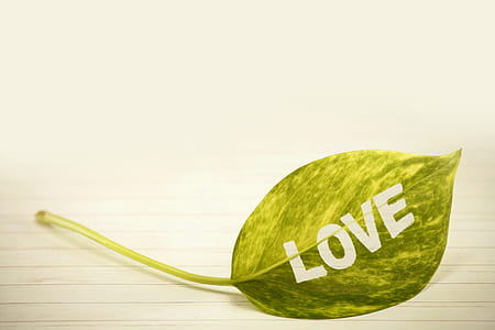 green leaf love