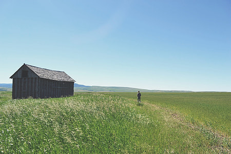 shed on grassy field