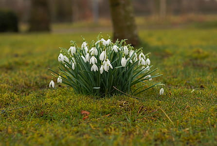 focused photo of green and white flowers