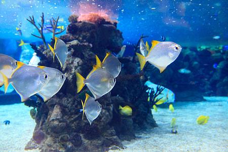 white and yellow saltwater fish