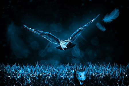 owl flying at nighttime