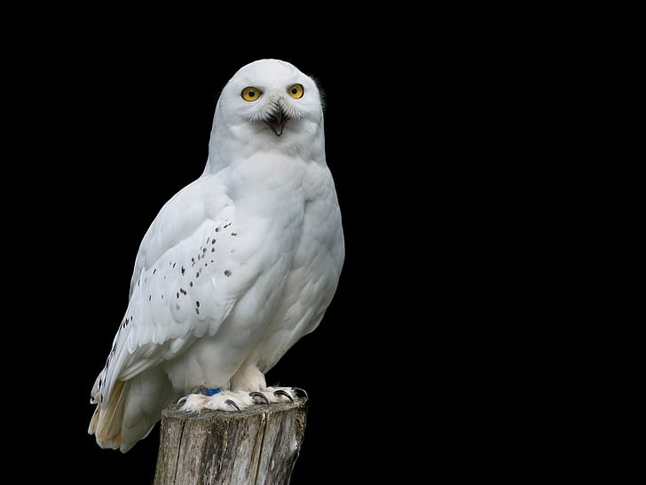 white owl standing on brown tree trunk