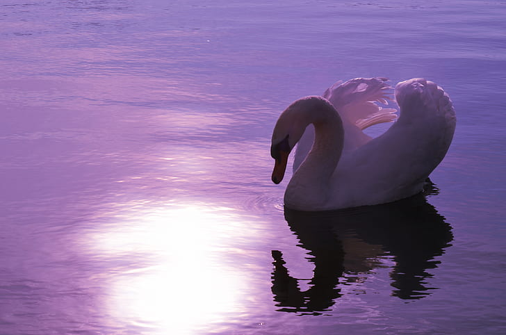 closeup photo of white duck
