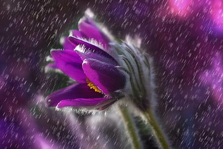 shallow photo of purple flower