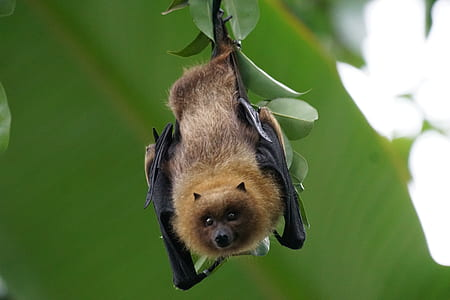 brown and black bat on green leaves