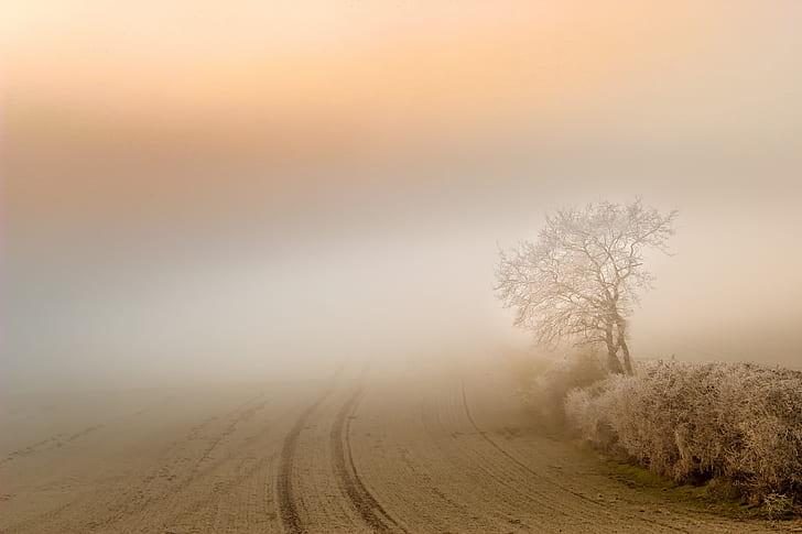 landscape photography of road near tree