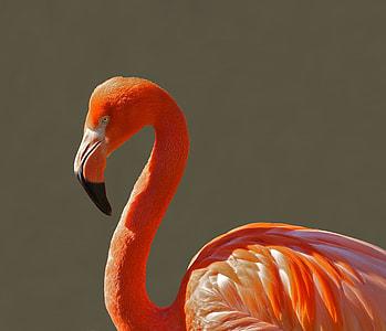 close-up photo of flamingo