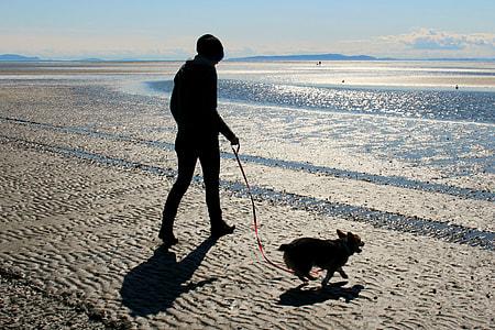 person walking Chihuahua on seashore