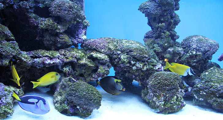fish swimming on corals