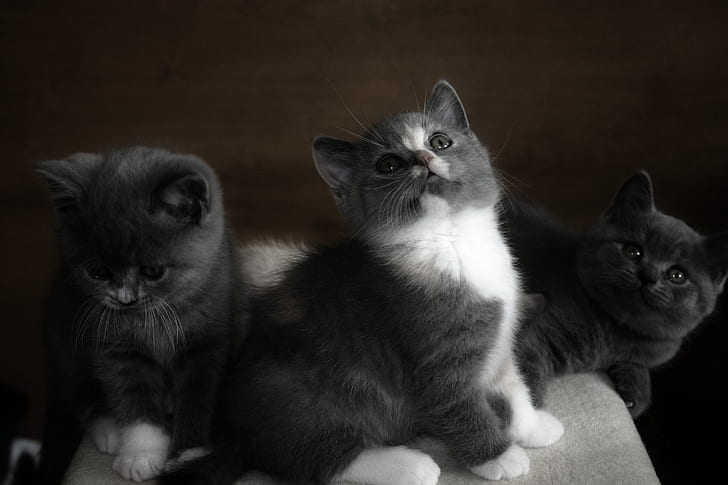 three black kittens looking up