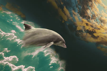 painting of dolphin and clouds
