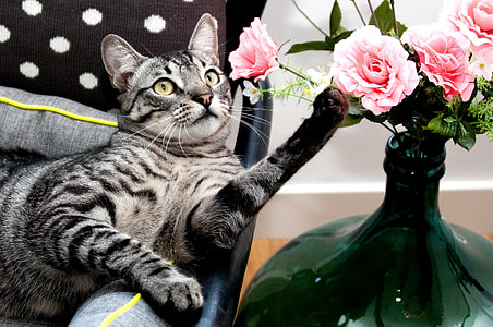 tabby cat beside pink roses