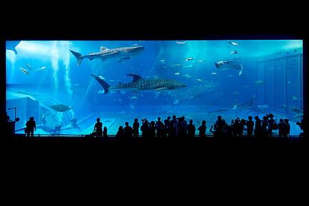 silhouette of people in front of aquarium