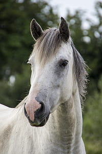 white and grey horse