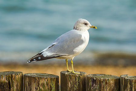 shallow focus photography of white bird on brown wooden trunk