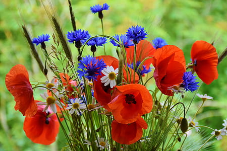 red, blue, and white flowers