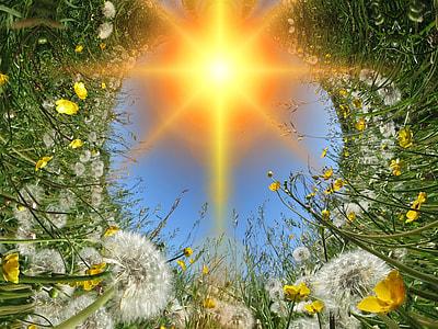 white dandelion