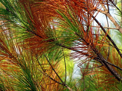 close-up photo of green and red leaf plants during daytime