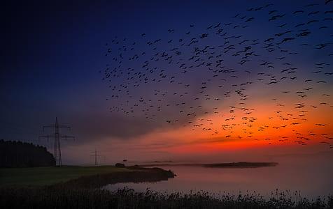 flock of black birds at sunset