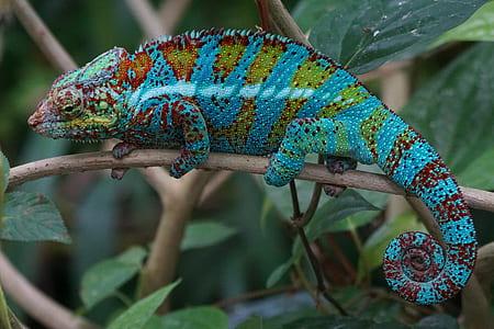 chameleon on branch of tree