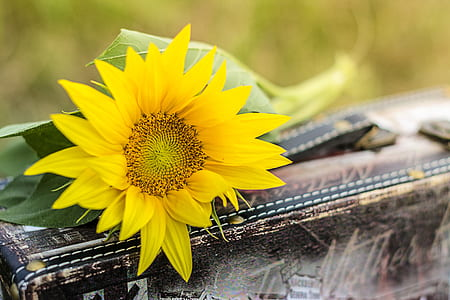 close up photo of yellow sunflower on brown wooden box