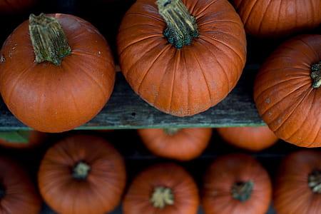 photography of orange squashes