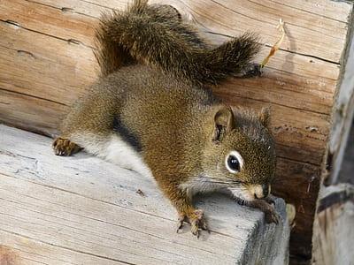 brown squirrel on brown log