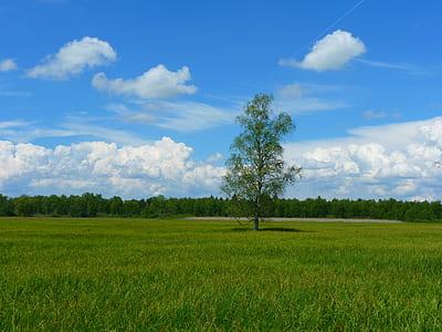 Green Field of Grasses Green Tree in Between