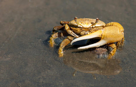 Yellow Crab on Gray Sand during Daytime