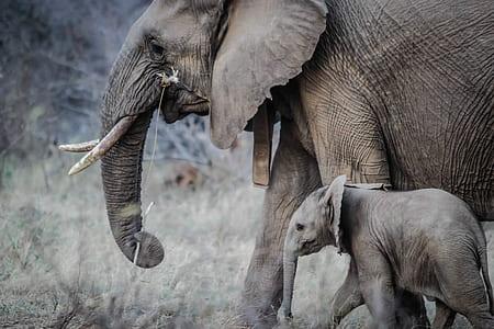 baby elephant and elephant