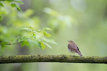 wildlife photography of brown bird on branch